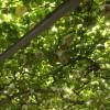 1日中遊べる!子どもとお出かけにオススメスポット_岡崎市のブドウ狩りに行ってきました。