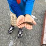 見釣りでハゼ釣りをしました_2015_三重県津市