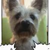 「北斗の宴」アプリで実家の犬を変身させようとしたらどうなったか?結果を教えます!!