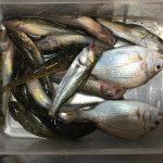 西浦松島突堤 付近で釣りをしました_2017